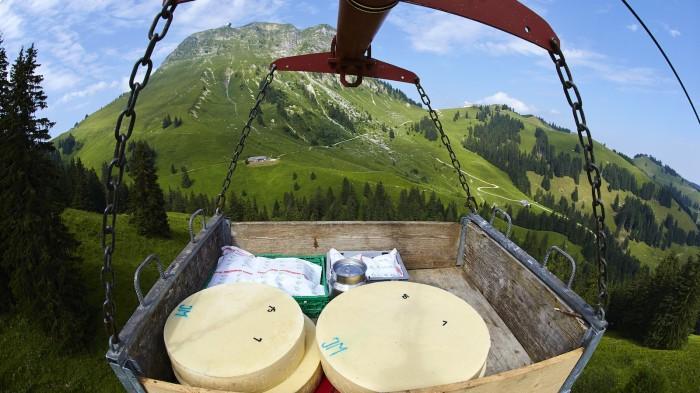 Сыр изменил развитие западной цивилизации - 1