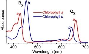 Синтезированы молекулы, поглощающие весь спектр солнечного света - 2