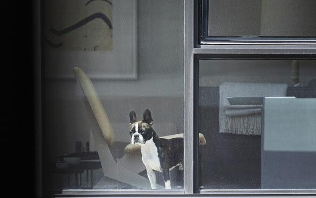Скрытую съёмку людей через окна квартир признали формой искусства, а не нарушением приватности - 3