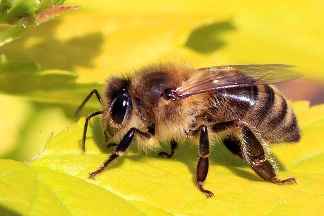 Компьютерная эмуляция мозга пчелы управляет дроном - 1
