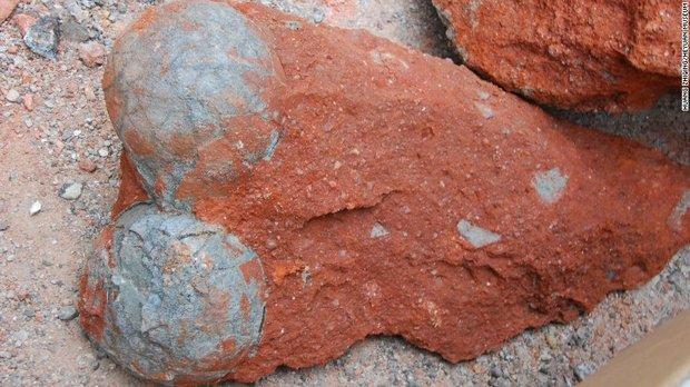Дорожные рабочие обнаружили окаменевшую кладку яиц динозавров в Китае - 2