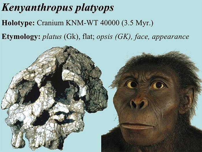 Найдены каменные орудия труда возрастом 3,3 млн лет - 3