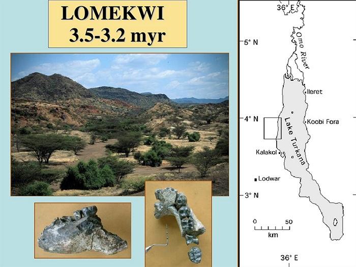 Найдены каменные орудия труда возрастом 3,3 млн лет - 1