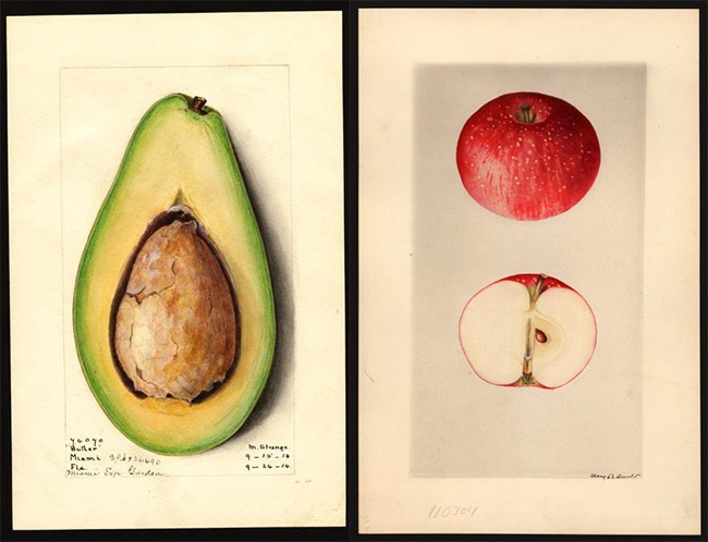 Американские власти прячут от народа 7854 картин с фруктами и орехами - 1