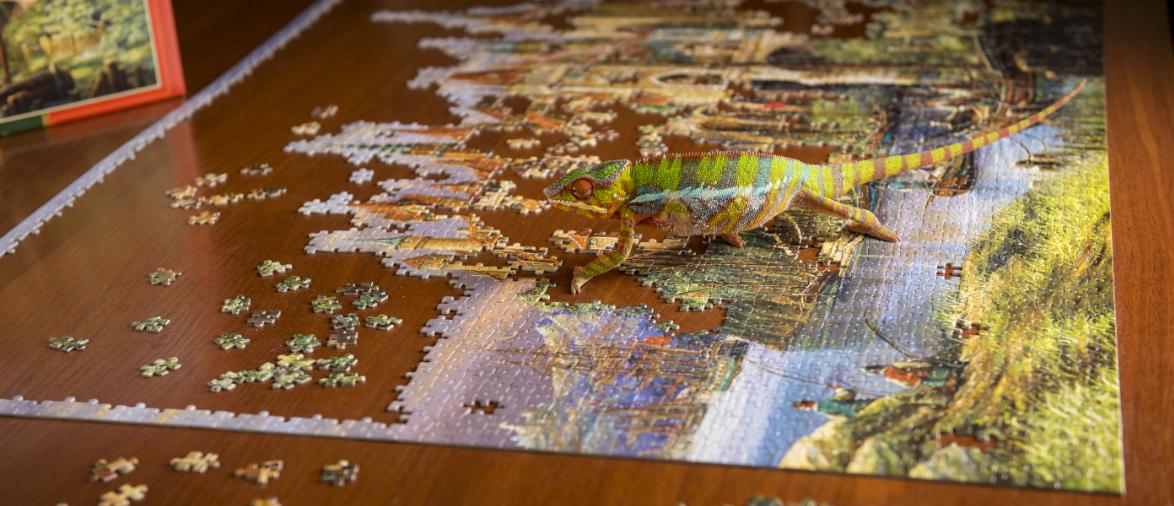 Хамелеоньи будни в офисе DataArt - 1