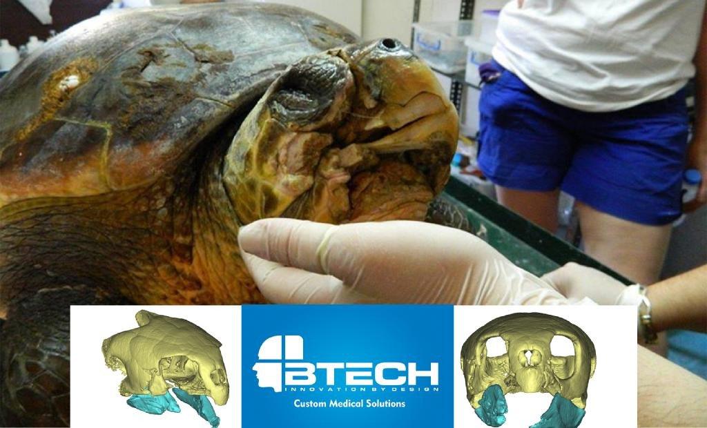 Морская черепаха с сильно поврежденными челюстями получила титановые протезы, отпечатанные на 3D-принтере - 2