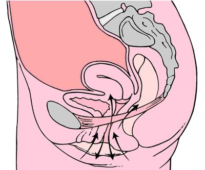 Умные вагинальные шарики Gball: тестируем, анализируем, общаемся с гинекологом и вспоминаем Арнольда Кегеля - 3