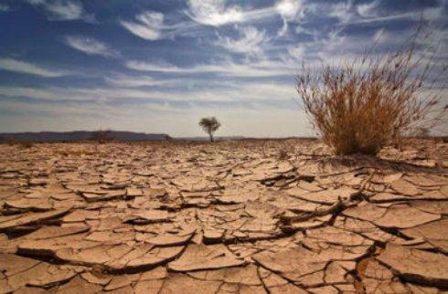На Земле началось шестое массовое вымирание,   ученые