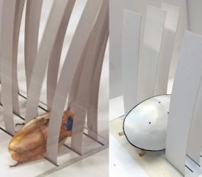 Форма тела таракана способствует его выживанию