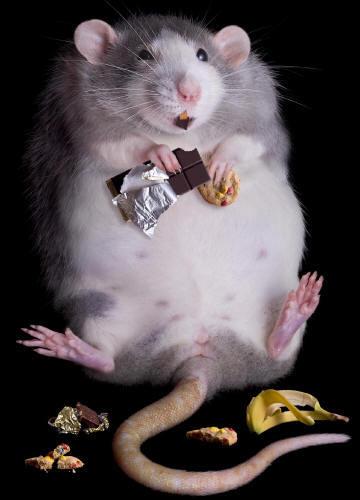 Есть и худеть: учёные обнаружили, какие белки отвечают за метаболизм - 1
