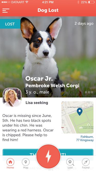 DataArt поможет найти пропавших собак - 2