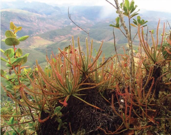 Новый вид растений найден на фотографиях Facebook - 3