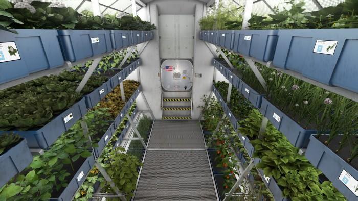 Кушать подано. Астронавты на МКС впервые попробуют выращенный на орбите салат - 1