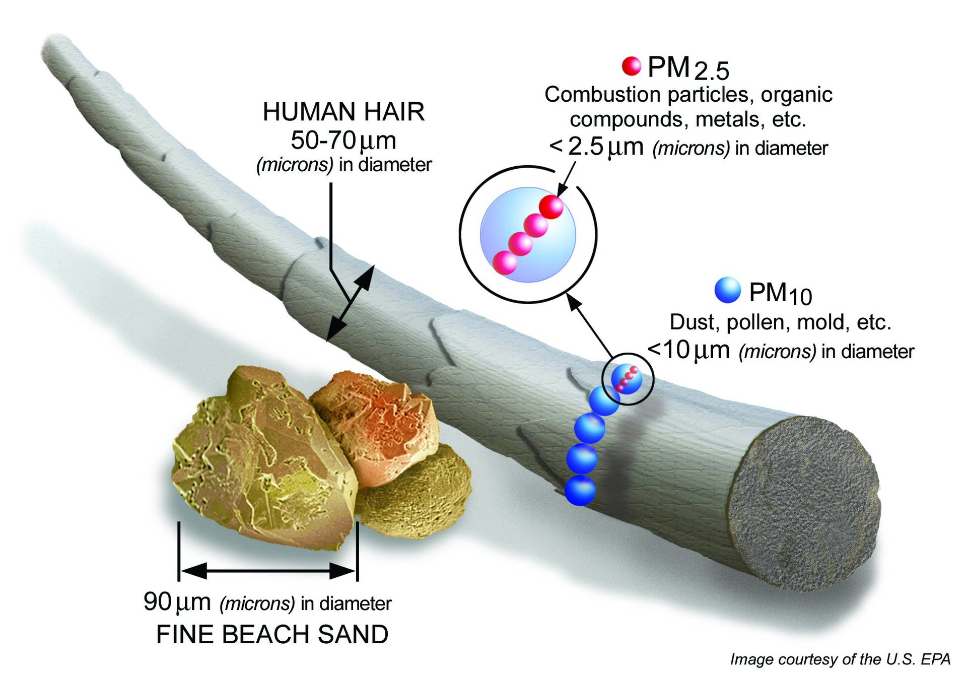 Нановредители: чем опасны ультрадисперсные частицы - 2
