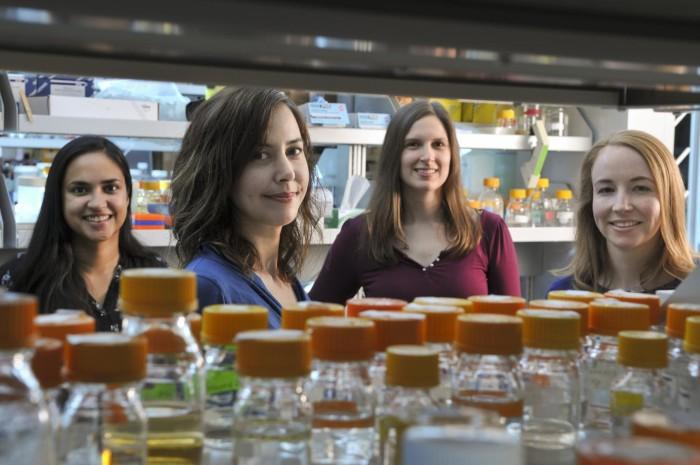 Генетически модифицированные дрожжи вырабатывают опиаты из сахара - 1