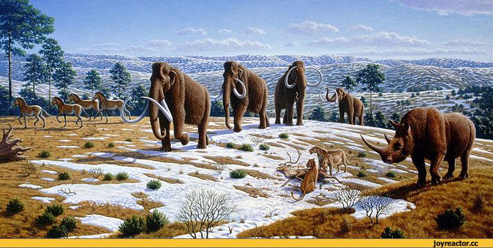 Палеонтологи научились определять вес мамонтов и гигантских ленивцев - 1