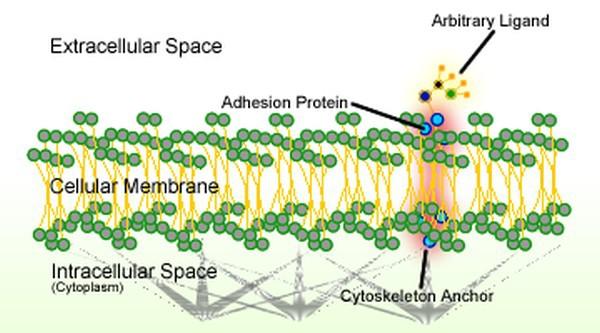 Раковые клетки теоретически можно перепрограммировать на нормальную работу - 1