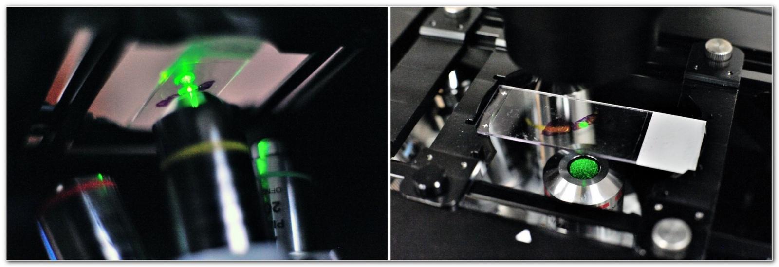 «Диагностировать рак поможет лазер», или Как устроен лазерный флуоресцентный гиперспектральный микроскоп - 17