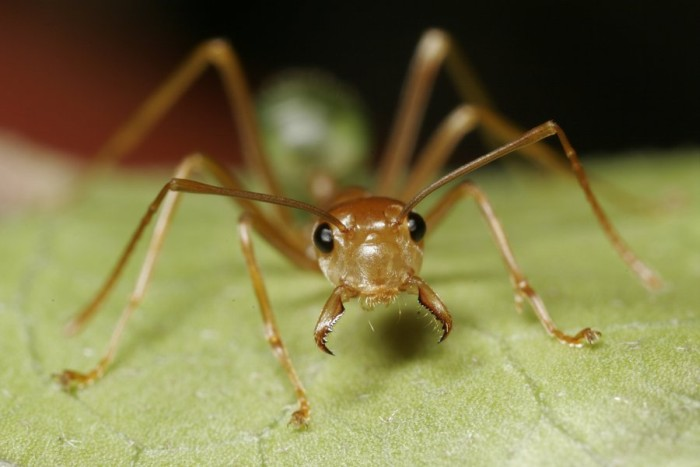 Муравьи не уступают по эффективности пестицидам - 1