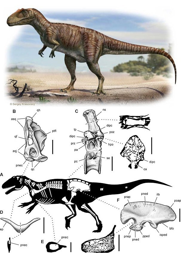 Сравнительная физиология динозавров и птиц. Популярно о малоизвестном. Часть 1 «Кости титанов» - 10