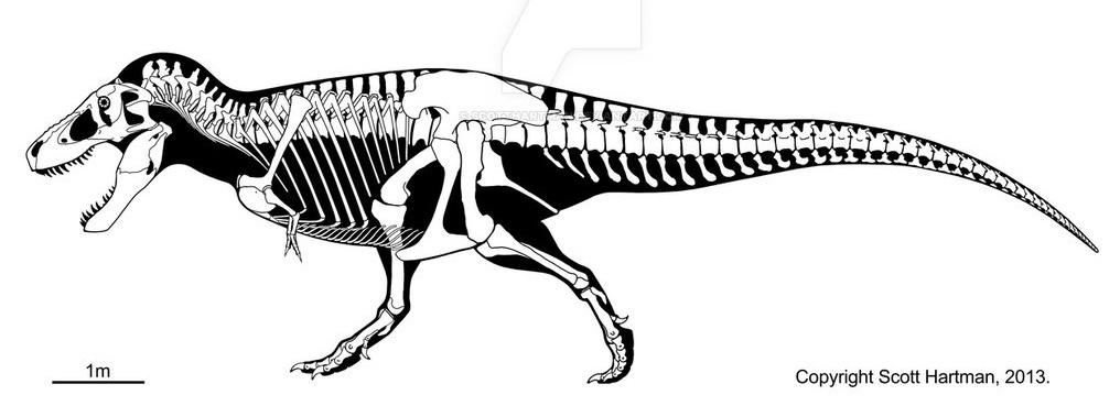 Сравнительная физиология динозавров и птиц. Популярно о малоизвестном. Часть 1 «Кости титанов» - 11
