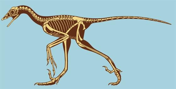 Сравнительная физиология динозавров и птиц. Популярно о малоизвестном. Часть 1 «Кости титанов» - 13