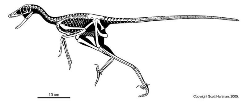 Сравнительная физиология динозавров и птиц. Популярно о малоизвестном. Часть 1 «Кости титанов» - 14