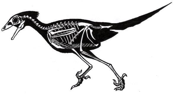 Сравнительная физиология динозавров и птиц. Популярно о малоизвестном. Часть 1 «Кости титанов» - 16