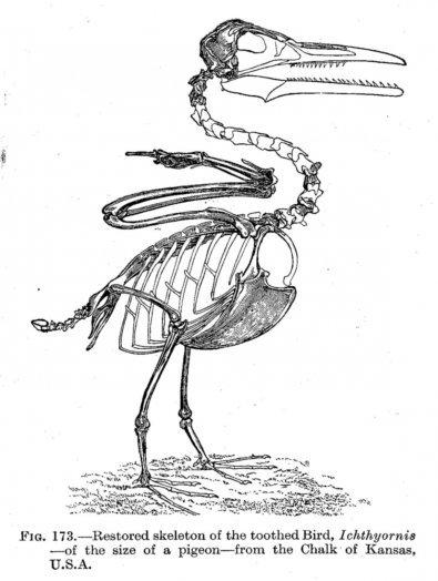 Сравнительная физиология динозавров и птиц. Популярно о малоизвестном. Часть 1 «Кости титанов» - 18