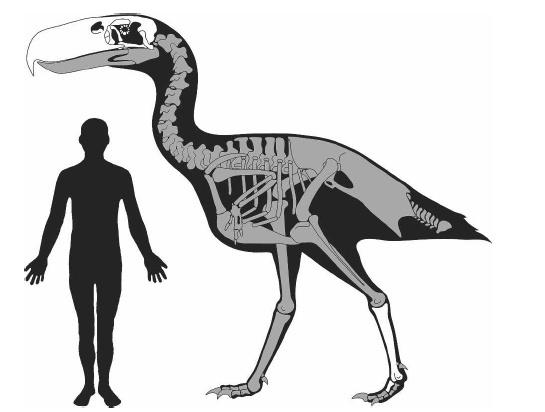 Сравнительная физиология динозавров и птиц. Популярно о малоизвестном. Часть 1 «Кости титанов» - 19