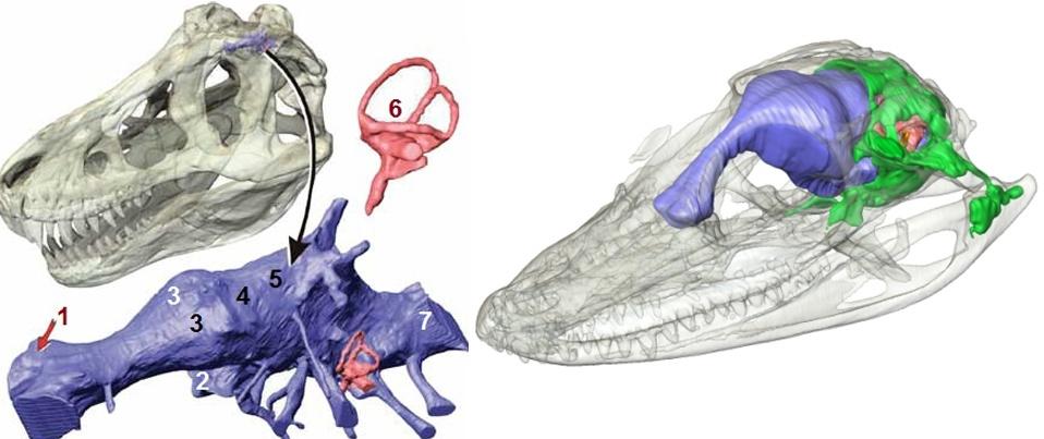 Сравнительная физиология динозавров и птиц. Популярно о малоизвестном. Часть 1 «Кости титанов» - 20