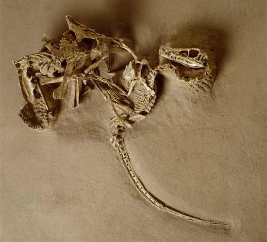 Сравнительная физиология динозавров и птиц. Популярно о малоизвестном. Часть 1 «Кости титанов» - 28