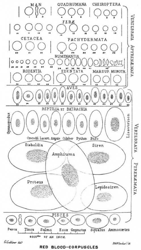 Сравнительная физиология динозавров и птиц. Популярно о малоизвестном. Часть 1 «Кости титанов» - 30
