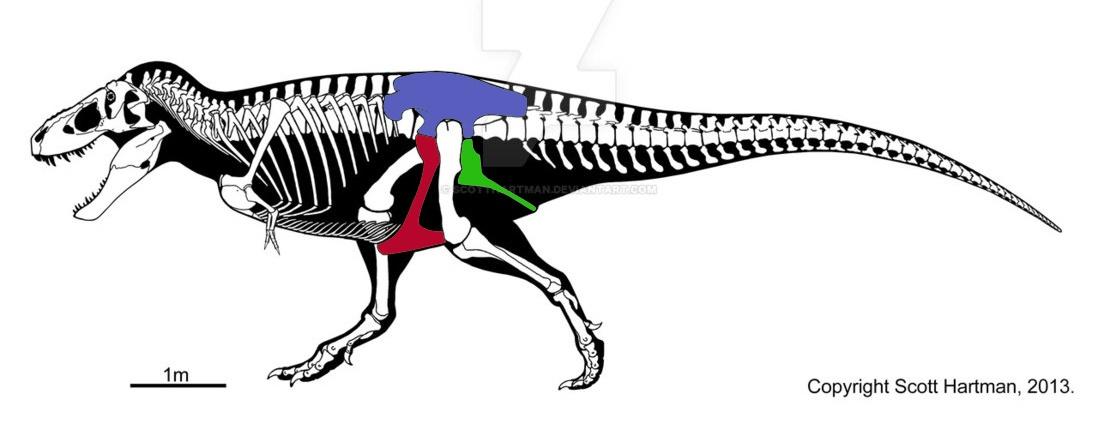 Сравнительная физиология динозавров и птиц. Популярно о малоизвестном. Часть 1 «Кости титанов» - 5