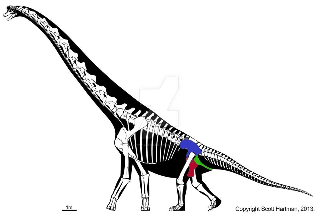 Сравнительная физиология динозавров и птиц. Популярно о малоизвестном. Часть 1 «Кости титанов» - 7