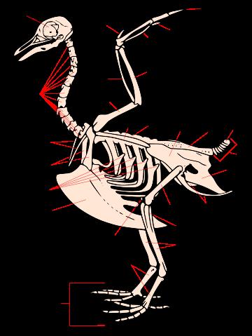 Сравнительная физиология динозавров и птиц. Популярно о малоизвестном. Часть 1 «Кости титанов» - 8