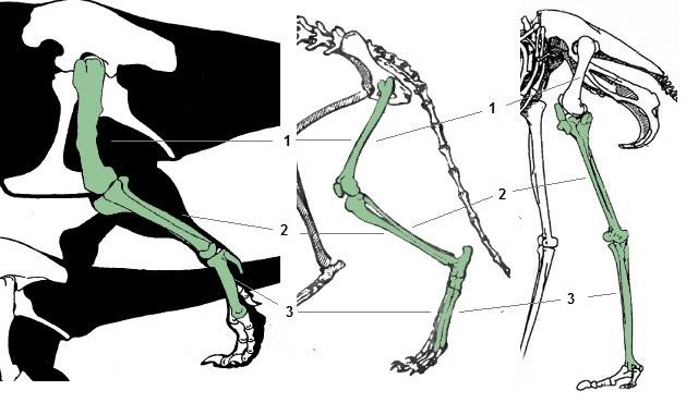Сравнительная физиология динозавров и птиц. Популярно о малоизвестном. Часть 1 «Кости титанов» - 9
