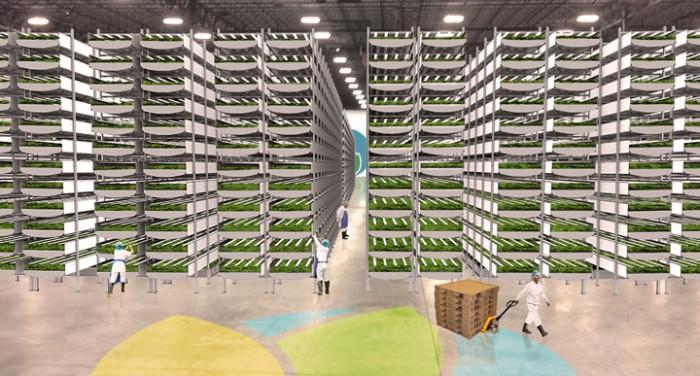 В подземных бункерах Лондона теперь выращивают салат - 4