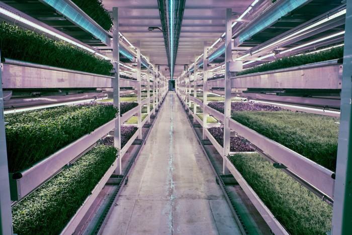 В подземных бункерах Лондона теперь выращивают салат - 1