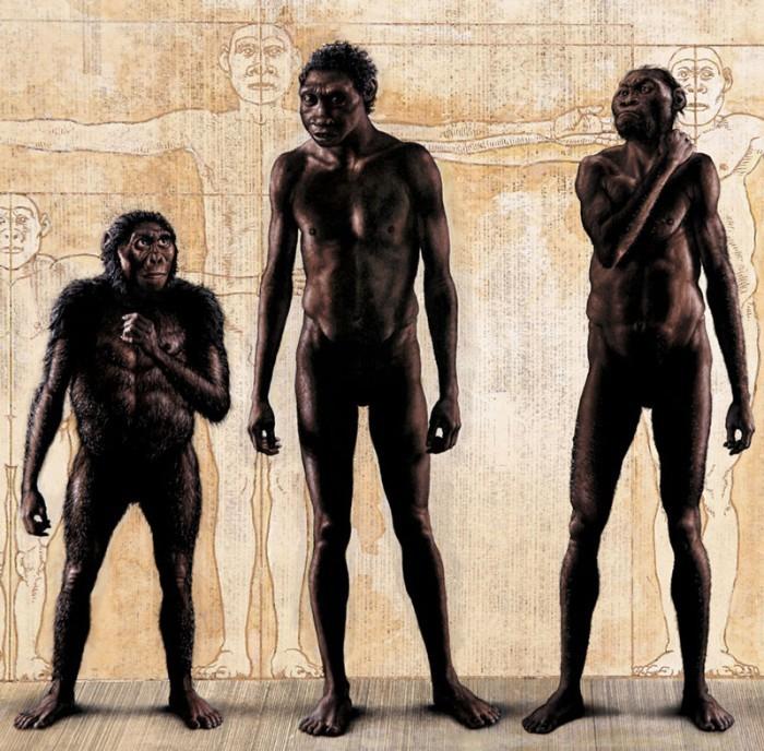 Homo naledi: обнаружен новый вид древних людей - 2