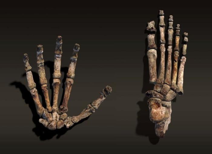 Homo naledi: обнаружен новый вид древних людей - 3