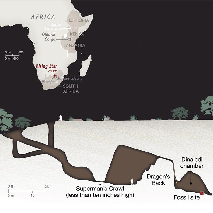 Homo naledi: обнаружен новый вид древних людей - 4