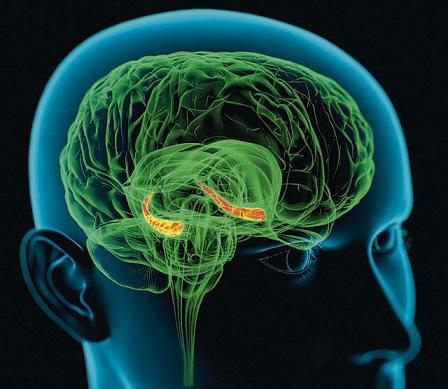 Как работает наш мозг или как смоделировать душу? - 10