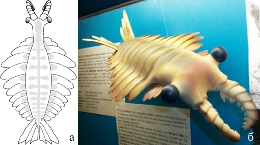 Модель Anomalocaris   canadensis  (Whittington, Briggs, 1996) и Модель Anomalocaris в National Dinosaur Museum, Canberra, Australia. (Википедия)