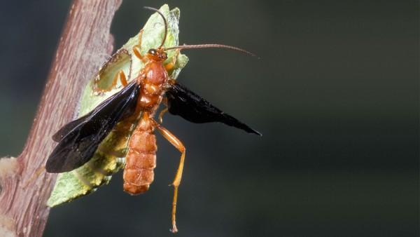 Осы внесли в бабочек новый генетический код - 1