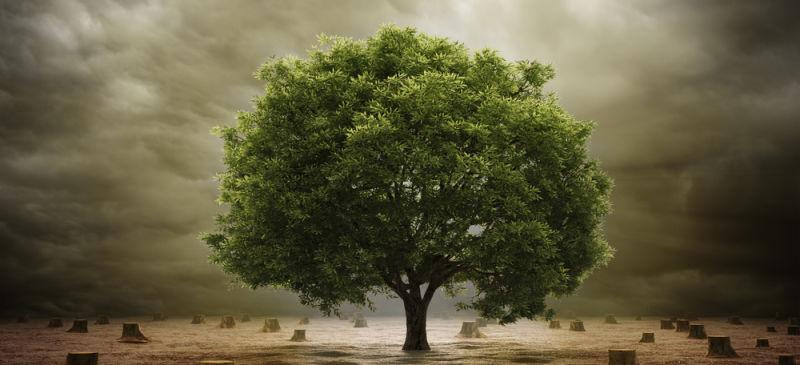 Подробное древо жизни от ученых университета Дьюка - 1