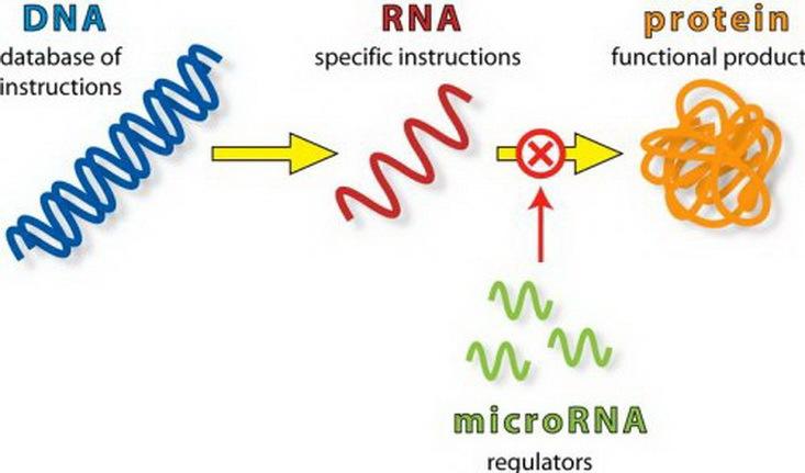 Как «перепрограммировать» рак - 2