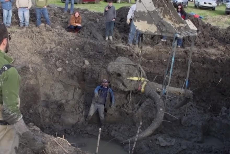 Американский фермер обнаружил останки мамонта на своем поле - 1
