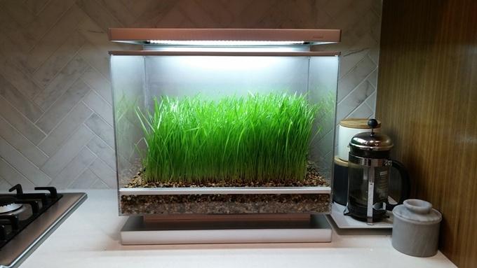 Biopod — умная экосистема в миниатюре с Kickstarter - 6