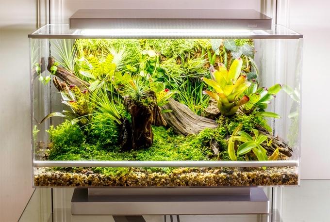 Biopod — умная экосистема в миниатюре с Kickstarter - 8